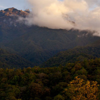 Mount Kinabalu Forest